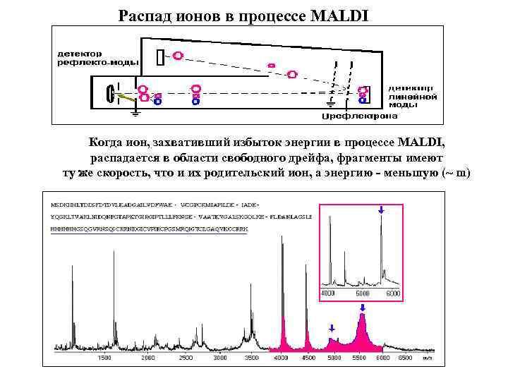 Распад ионов в процессе MALDI Когда ион, захвативший избыток энергии в процессе MALDI, распадается