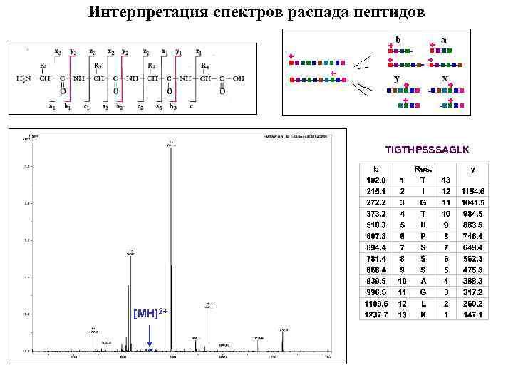 Интерпретация спектров распада пептидов TIGTHPSSSAGLK [MH]2+
