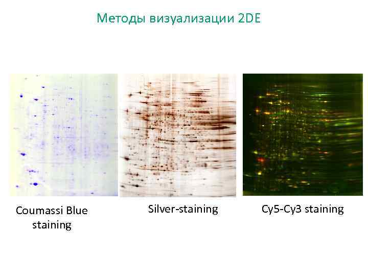 Методы визуализации 2 DE Coumassi Blue staining Silver-staining Cy 5 -Cy 3 staining