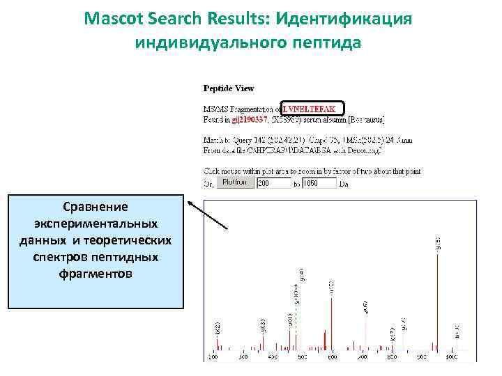 Mascot Search Results: Идентификация индивидуального пептида Сравнение экспериментальных данных и теоретических спектров пептидных фрагментов