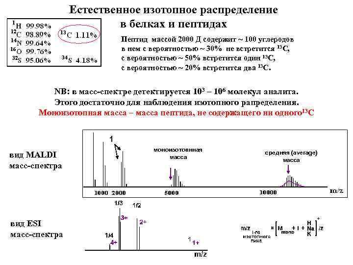 Естественное изотопное распределение в белках и пептидах Пептид массой 2000 Д содержит ~ 100