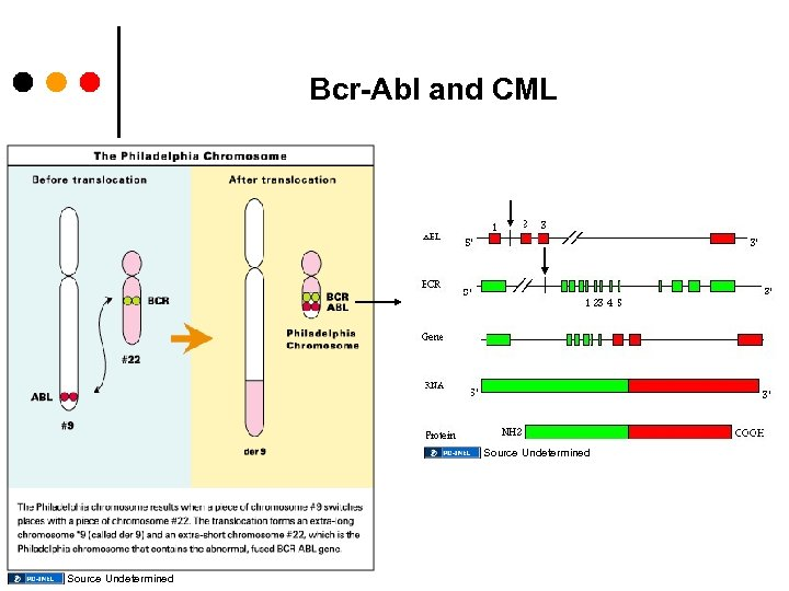 Bcr-Abl and CML Source Undetermined