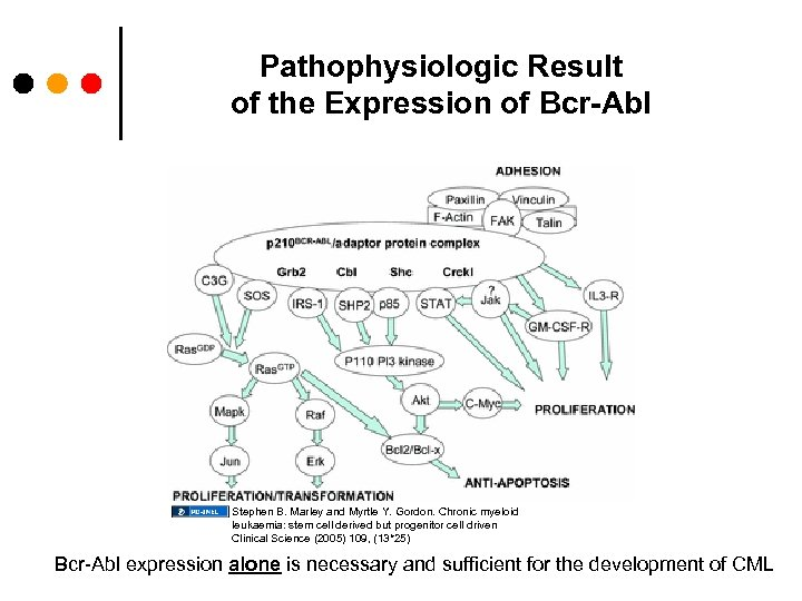 Pathophysiologic Result of the Expression of Bcr-Abl Stephen B. Marley and Myrtle Y. Gordon.