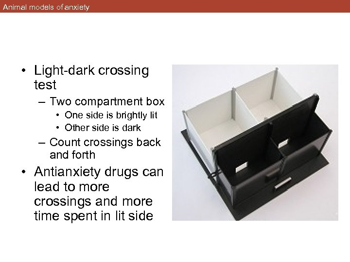Animal models of anxiety • Light-dark crossing test – Two compartment box • One