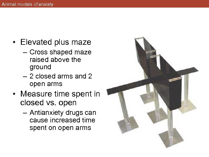 Animal models of anxiety • Elevated plus maze – Cross shaped maze raised above