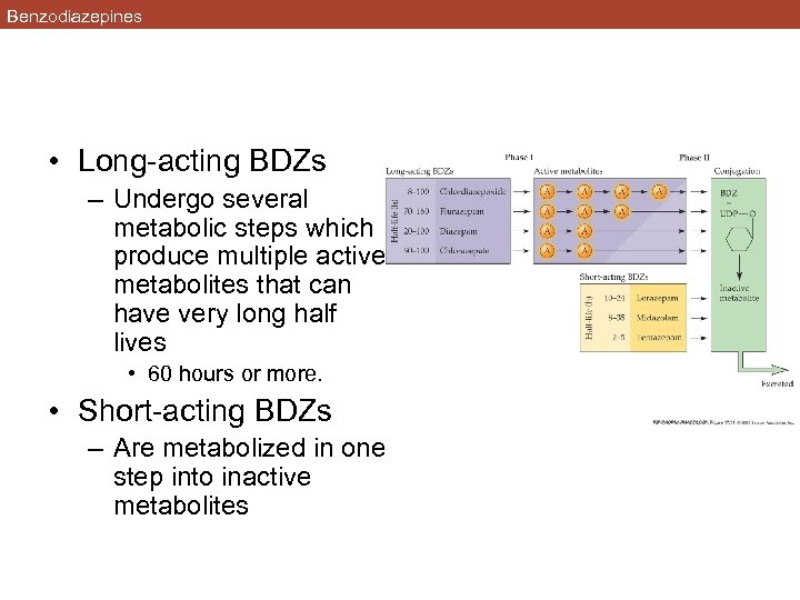 Benzodiazepines • Long-acting BDZs – Undergo several metabolic steps which produce multiple active metabolites