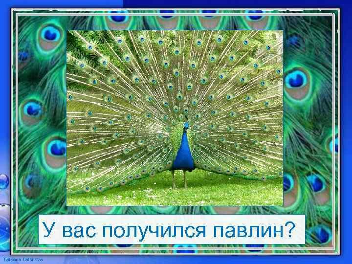 У вас получился павлин? Tatyana Latsheva