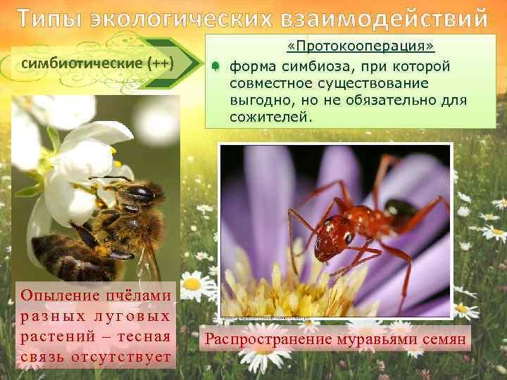 картинки растений и пчел пример симбиоза так люди