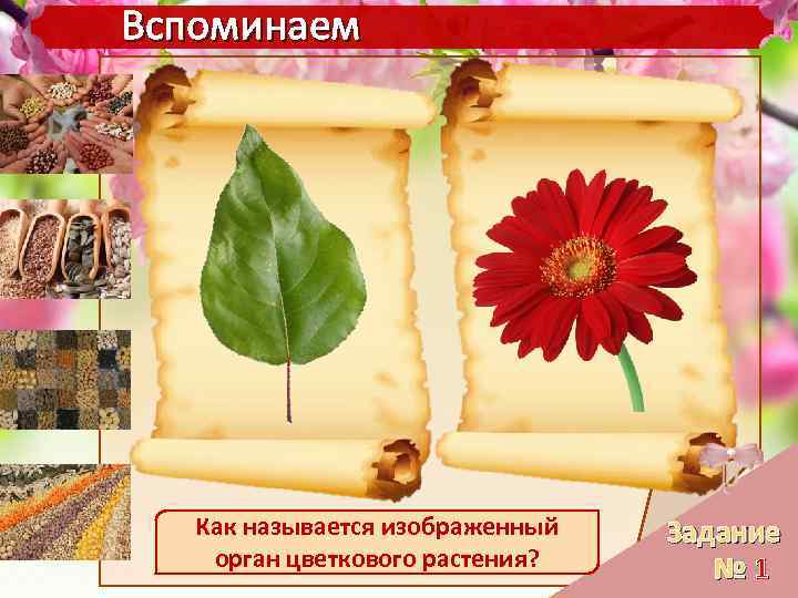 семена цветкова