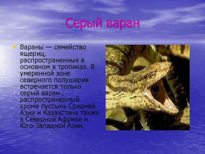 Серый варан • Вараны — семейство ящериц, распространенных в основном в тропиках. В умеренной