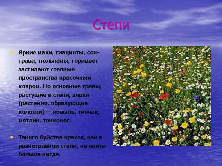 Степи • Яркие маки, гиацинты, сонтрава, тюльпаны, горицвет застилают степные пространства красочным ковром. Но