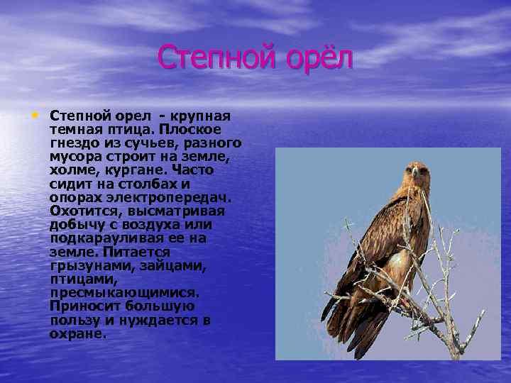 Степной орёл • Степной орел - крупная темная птица. Плоское гнездо из сучьев, разного