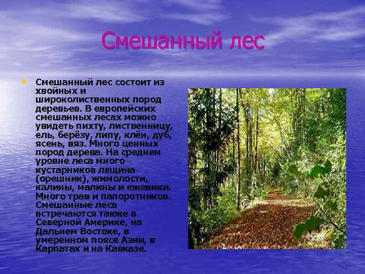 Смешанный лес • Смешанный лес состоит из хвойных и широколиственных пород деревьев. В европейских