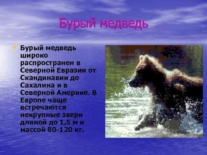 Бурый медведь • Бурый медведь широко распространен в Северной Евразии от Скандинавии до Сахалина
