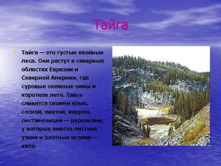Тайга • Тайга — это густые хвойные леса. Они растут в северных областях Евразии
