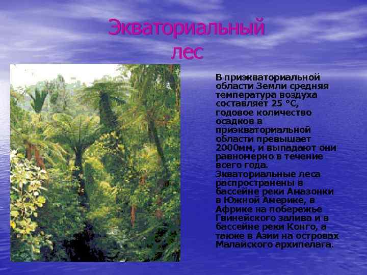 Экваториальный лес В приэкваториальной области Земли средняя температура воздуха составляет 25 °С, годовое количество