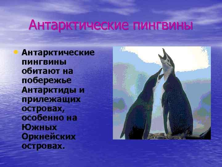Антарктические пингвины • Антарктические пингвины обитают на побережье Антарктиды и прилежащих островах, особенно на