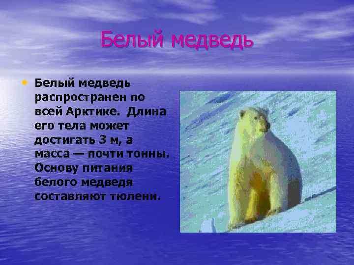 Белый медведь • Белый медведь распространен по всей Арктике. Длина его тела может достигать