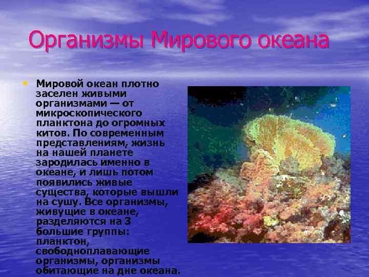 Организмы Мирового океана • Мировой океан плотно заселен живыми организмами — от микроскопического планктона