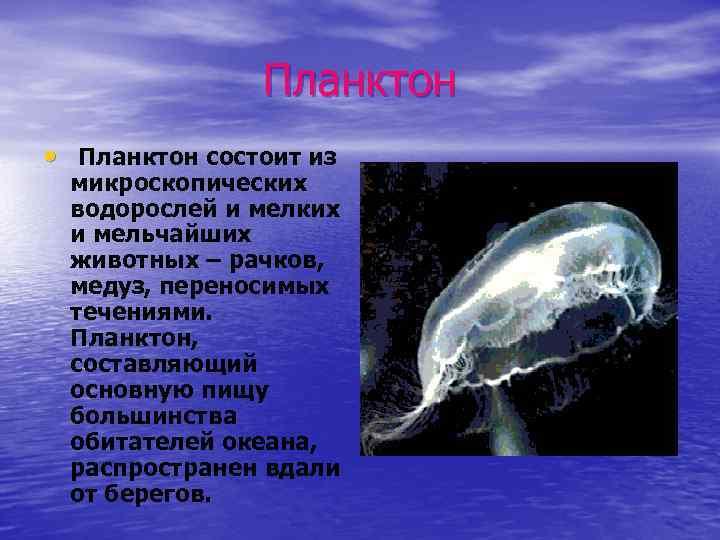 Планктон • Планктон состоит из микроскопических водорослей и мелких и мельчайших животных – рачков,