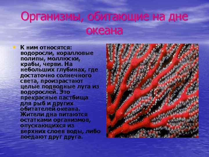 Организмы, обитающие на дне океана • К ним относятся: водоросли, коралловые полипы, моллюски, крабы,