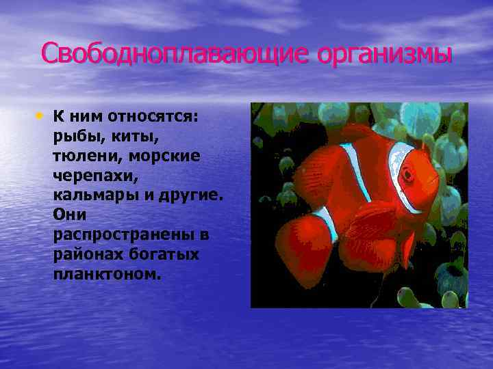 Свободноплавающие организмы • К ним относятся: рыбы, киты, тюлени, морские черепахи, кальмары и другие.