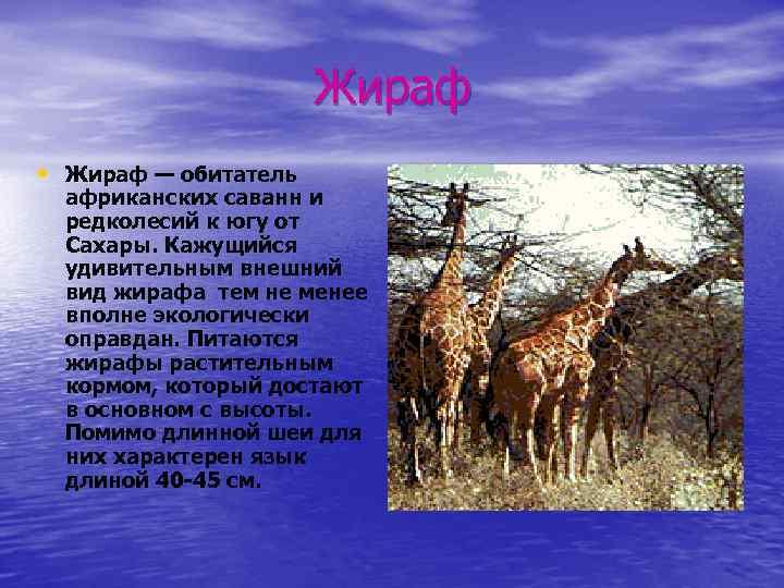 Жираф • Жираф — обитатель африканских саванн и редколесий к югу от Сахары. Кажущийся