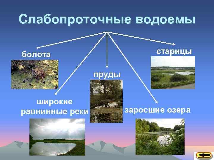 Слабопроточные водоемы старицы болота пруды широкие равнинные реки заросшие озера