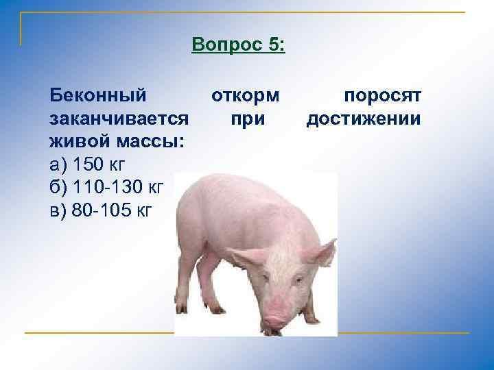 Вопрос 5: Беконный заканчивается живой массы: а) 150 кг б) 110 130 кг в)