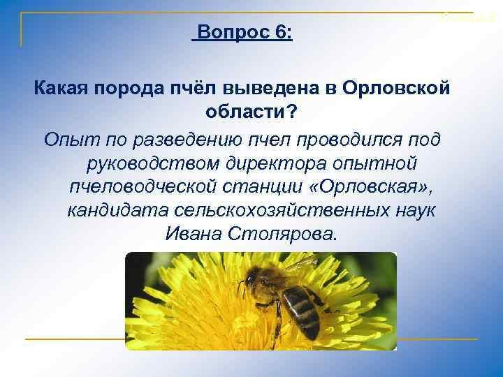 Вопрос 6: Слайд 8 Какая порода пчёл выведена в Орловской области? Опыт по разведению