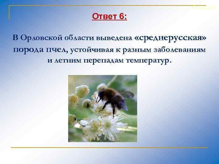 Слайд 9 Ответ 6: В Орловской области выведена «среднерусская» порода пчел, устойчивая к разным