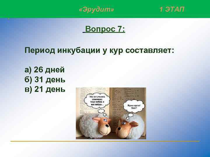 «Эрудит» Слайд 10 1 ЭТАП Вопрос 7: Период инкубации у кур составляет: а)