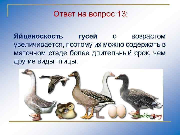 Ответ на вопрос 13: Яйценоскость гусей с возрастом увеличивается, поэтому их можно содержать в