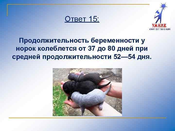 Ответ 15: Продолжительность беременности у норок колеблется от 37 до 80 дней при средней