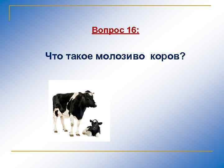 Вопрос 16: Что такое молозиво коров?