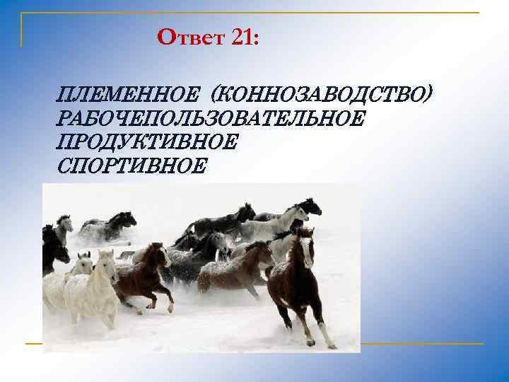 Ответ 21: ПЛЕМЕННОЕ (КОННОЗАВОДСТВО) РАБОЧЕПОЛЬЗОВАТЕЛЬНОЕ ПРОДУКТИВНОЕ СПОРТИВНОЕ