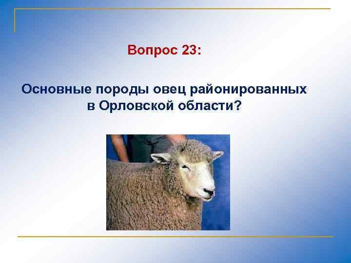 Вопрос 23: Основные породы овец районированных в Орловской области?