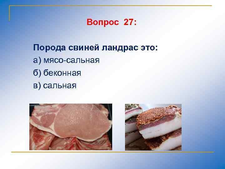 Вопрос 27: Порода свиней ландрас это: а) мясо сальная б) беконная в) сальная