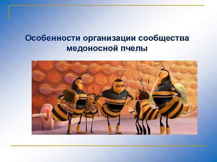 Особенности организации сообщества медоносной пчелы