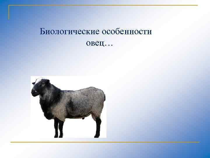 Биологические особенности овец…