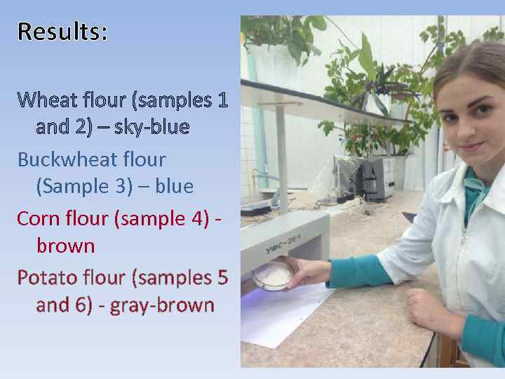 Results: Wheat flour (samples 1 and 2) – sky-blue Buckwheat flour (Sample 3) –