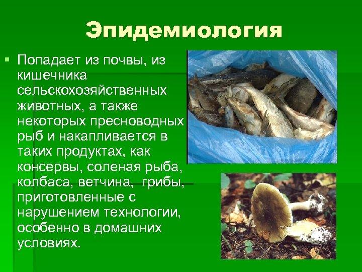Эпидемиология § Попадает из почвы, из кишечника сельскохозяйственных животных, а также некоторых пресноводных рыб