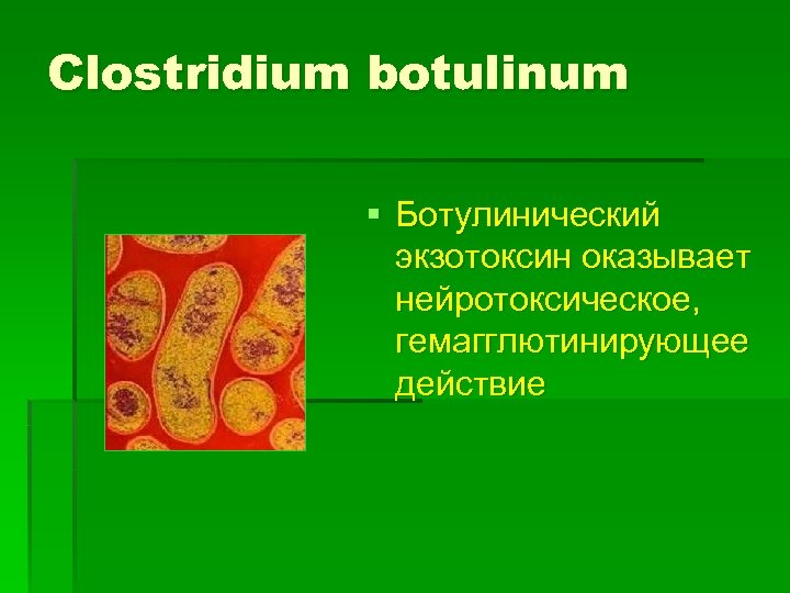 Clostridium botulinum § Ботулинический экзотоксин оказывает нейротоксическое, гемагглютинирующее действие