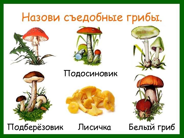 Назови съедобные грибы. Подосиновик Подберёзовик Лисичка Белый гриб