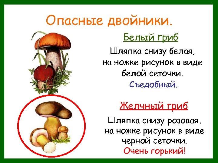 Опасные двойники. Белый гриб Шляпка снизу белая, на ножке рисунок в виде белой сеточки.