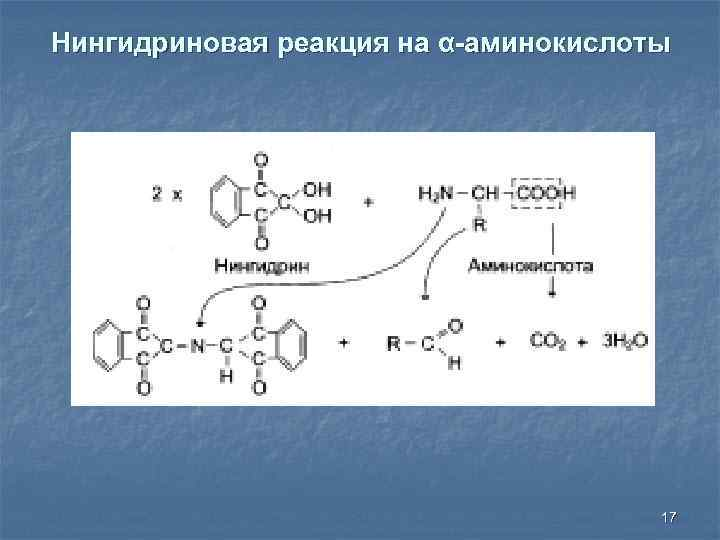 Нингидриновая реакция на α-аминокислоты 17