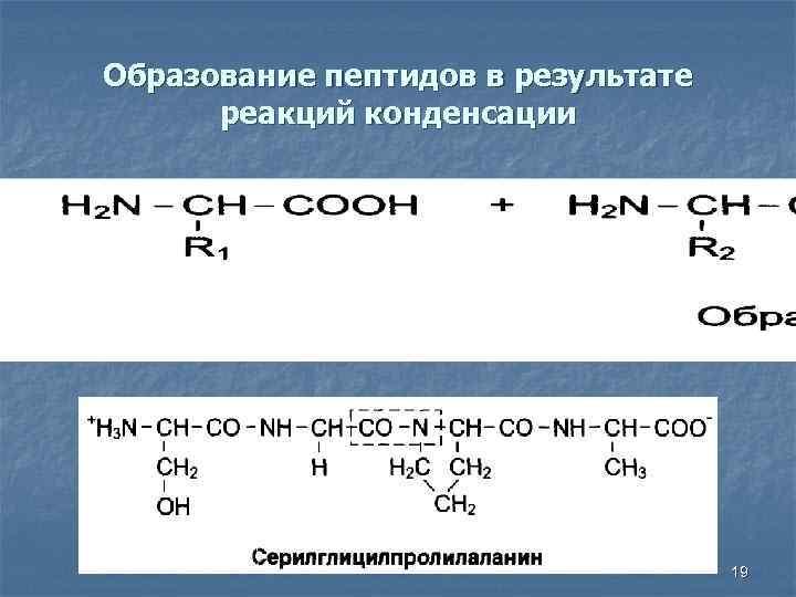 Образование пептидов в результате реакций конденсации 19