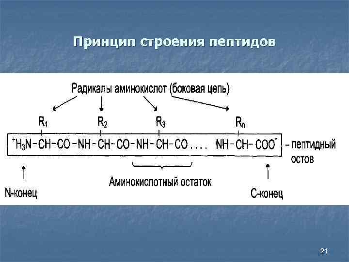 Принцип строения пептидов 21