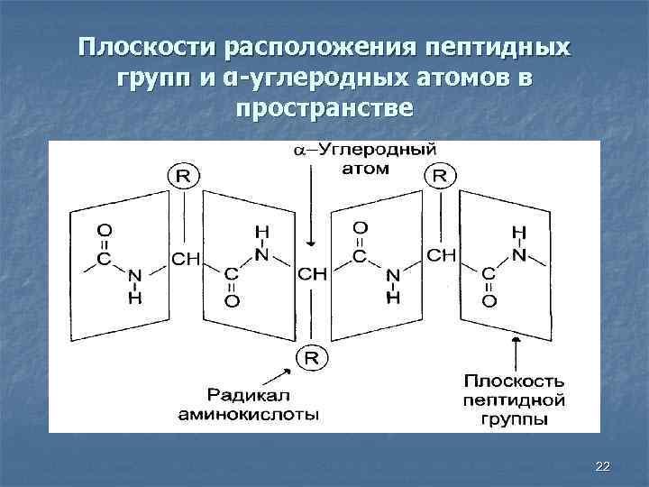 Плоскости расположения пептидных групп и α-углеродных атомов в пространстве 22