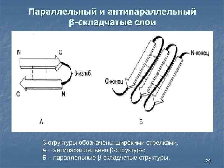 Параллельный и антипараллельный β-складчатые слои β-структуры обозначены широкими стрелками. А – антипараллельная β-структура; Б